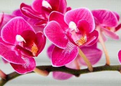 Orchideenpracht in de Noordoostpolder