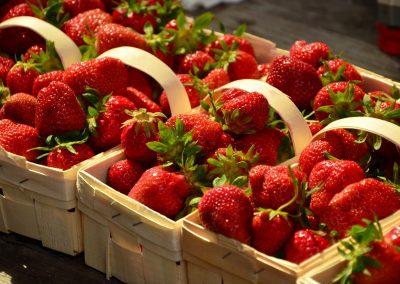Aardbeien & varen op de IJssel